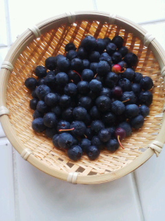 blueberry。